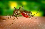 Yellow Fever Vaccine Leicester
